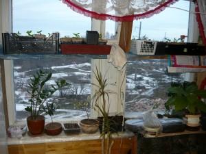 Подставка под рассаду на окне