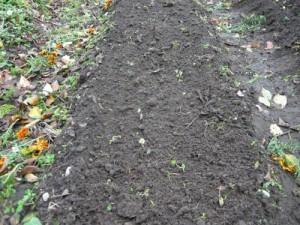 Вид на выравненную грядку после посадки чеснока