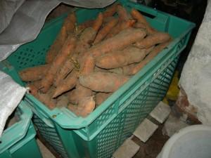Хранение моркови в пластиковом ящике