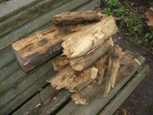 Куча перегнившей древесины, вполне пригодной к переработки в мульчу