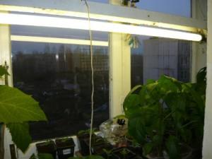 Подсветка рассады на балконе