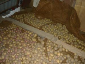 Разные сорта картофеля, разделенные доской