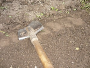Утрамбовка плошмя боковых сторон грядки тыльной стороной лопаты