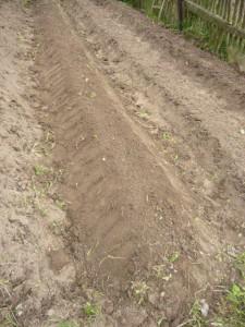 Заготовленные узкие грядки для посадки севка лука под зиму