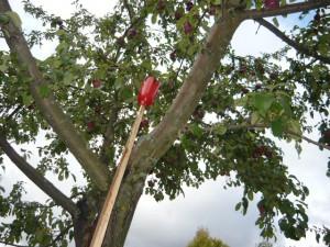 Захват яблока при помощи плодосъемника