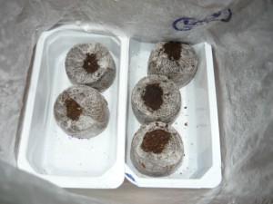 Вид на посеянные семена огурцов в таблетки Джиффи -7