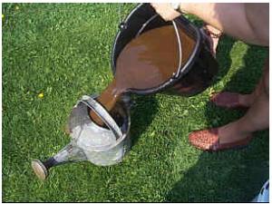Переливка компостного чая в лейку
